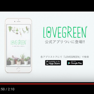 【LOVEGREEN×Time mart】ポップアップイベントin渋谷モディ 2016.1.12 – 2016.1.24